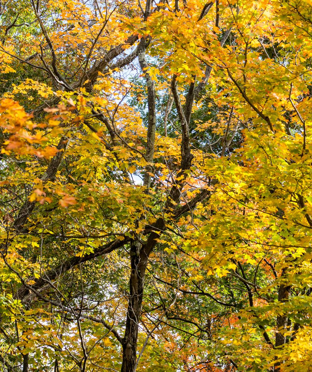 fall2015-17.jpg