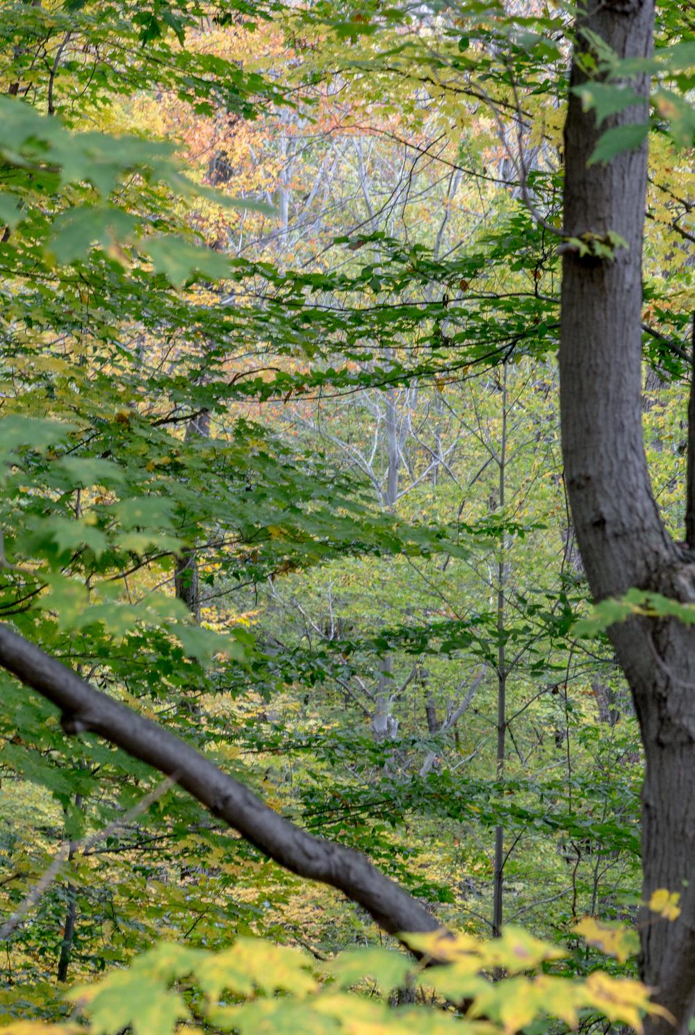 fall2015-19.jpg