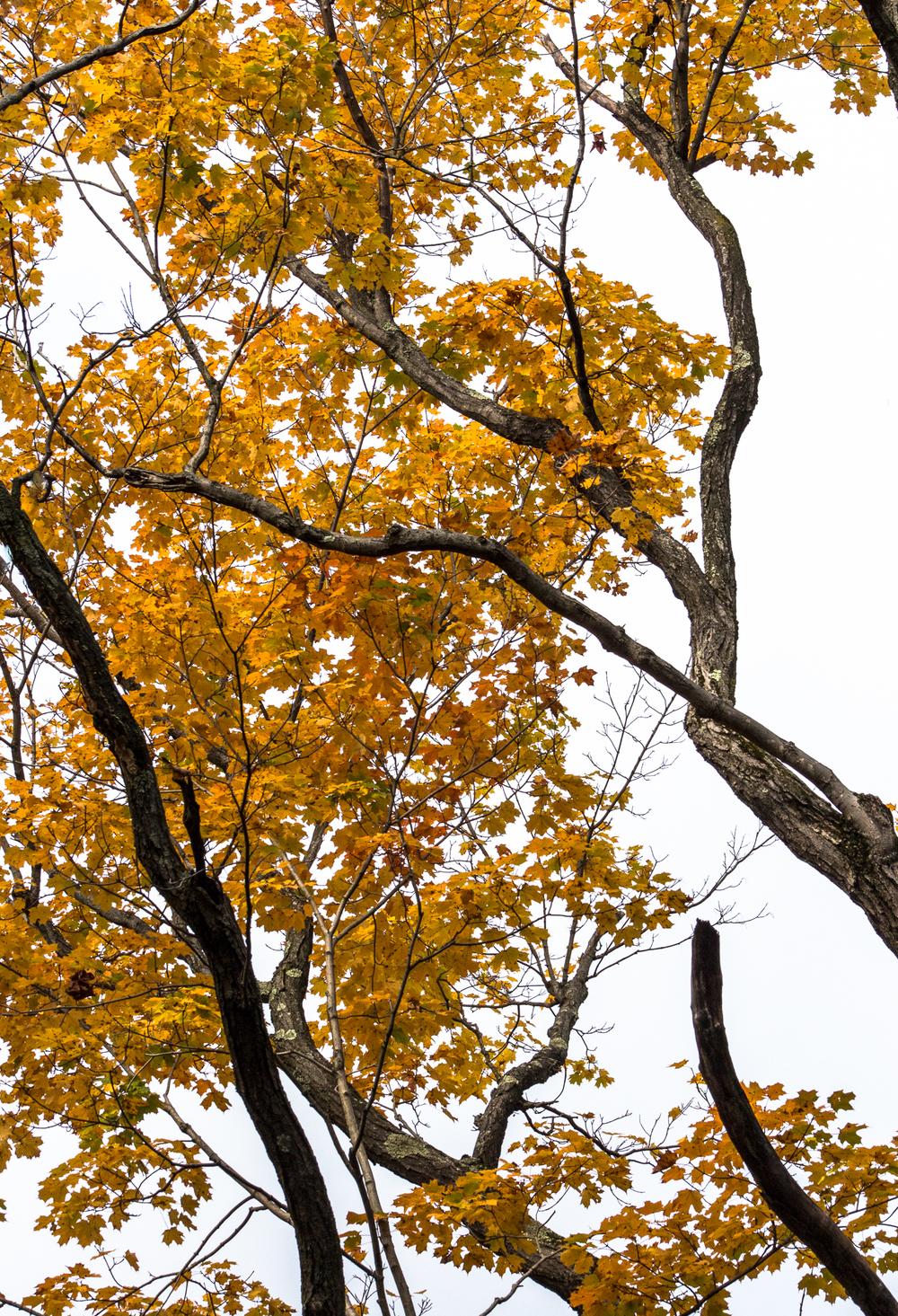 Fall2015-26.jpg