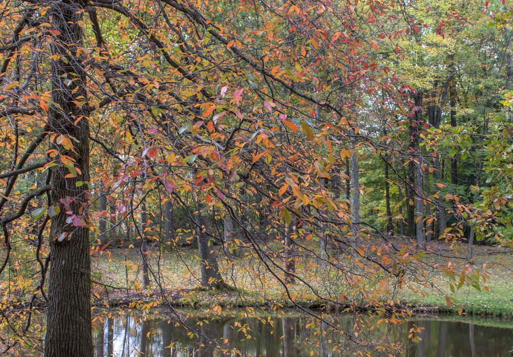 Fall2015-32.jpg