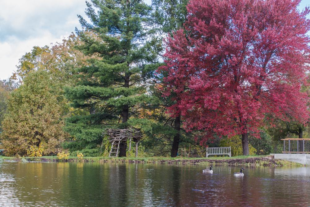 Fall2015-42.jpg