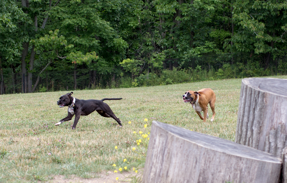 Canine Meadows-3.jpg