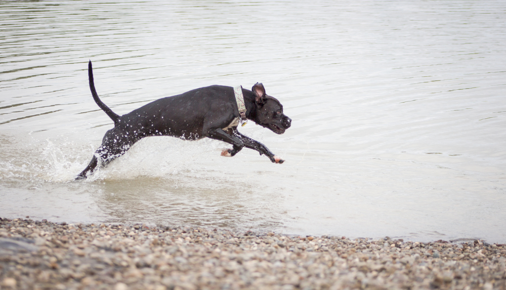 Canine Meadows3-3.jpg