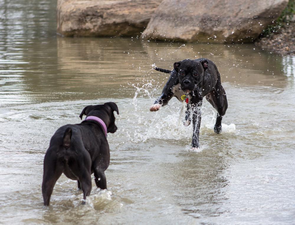 Canine Meadows3-8.jpg