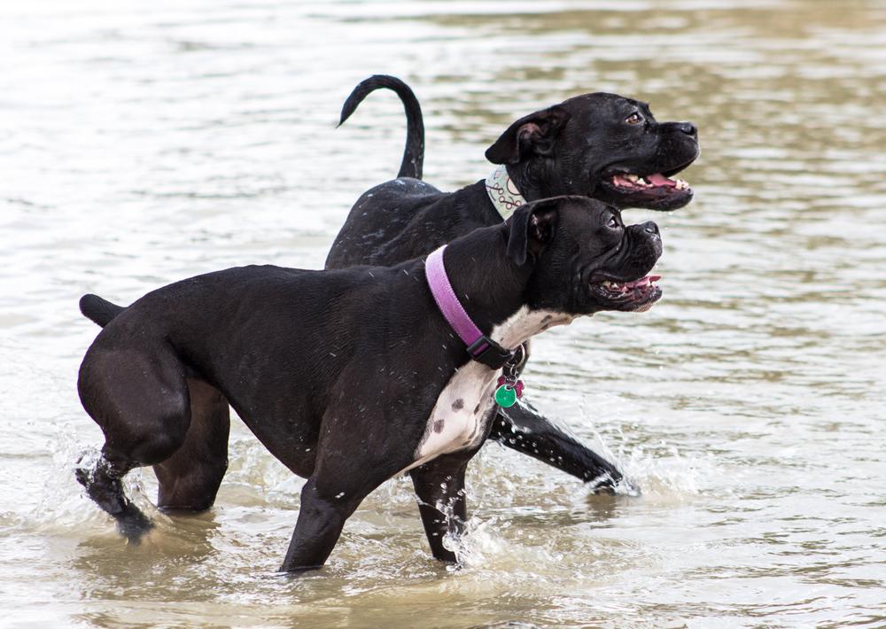 Canine Meadows3-9.jpg
