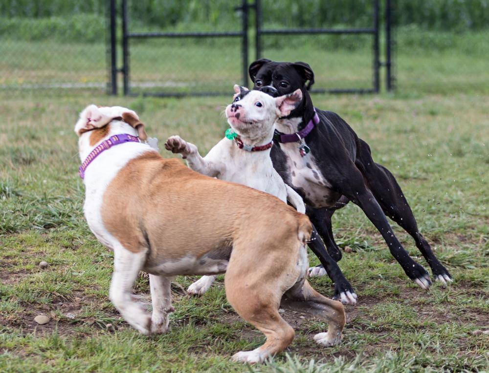 Canine Meadows3-14.jpg