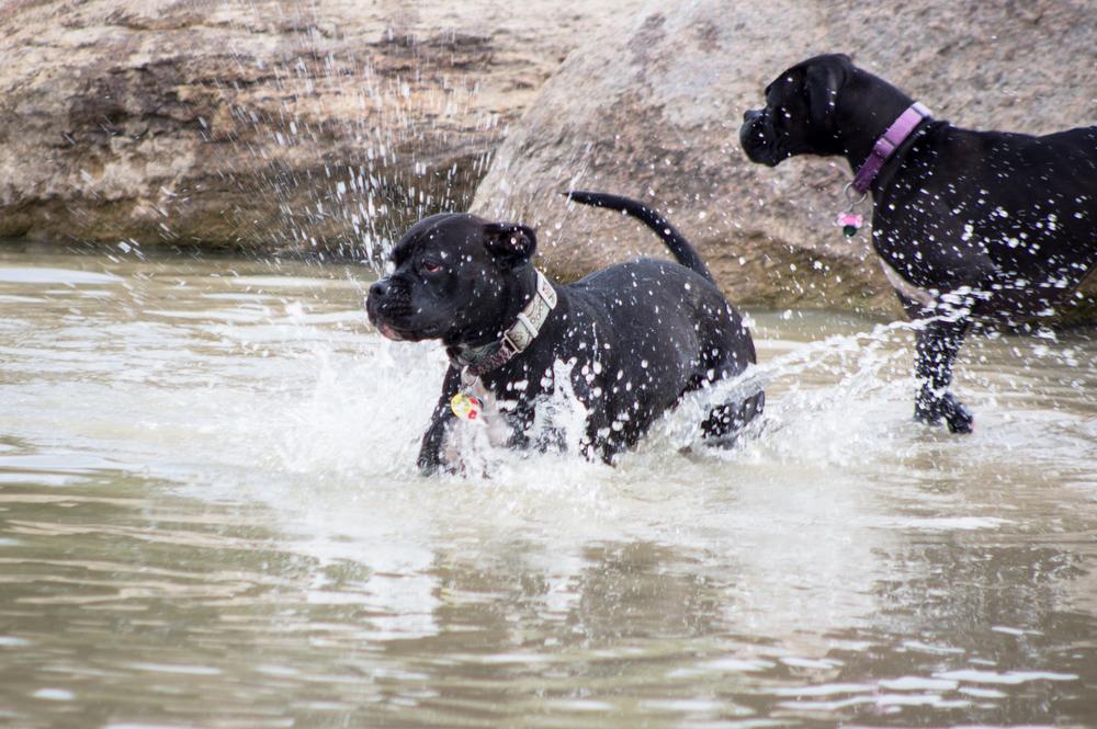 Canine Meadows3-18.jpg