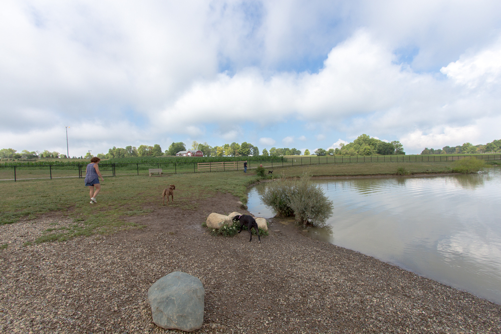 Canine Meadows3-21.jpg