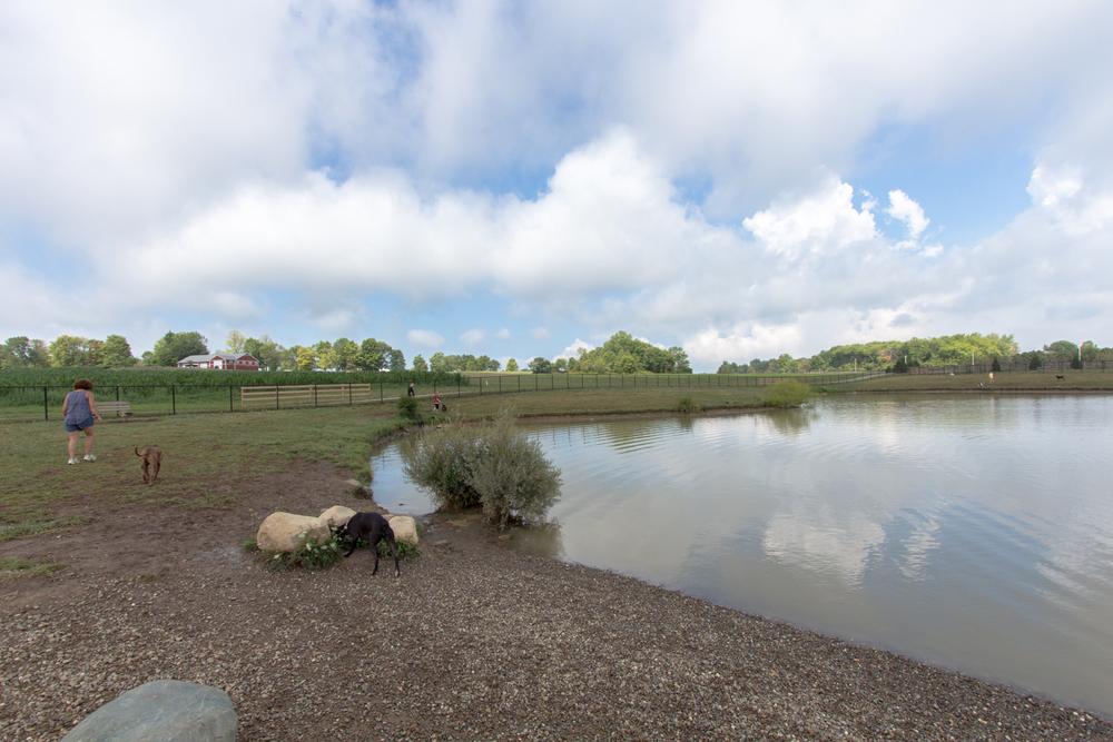 Canine Meadows3-22.jpg