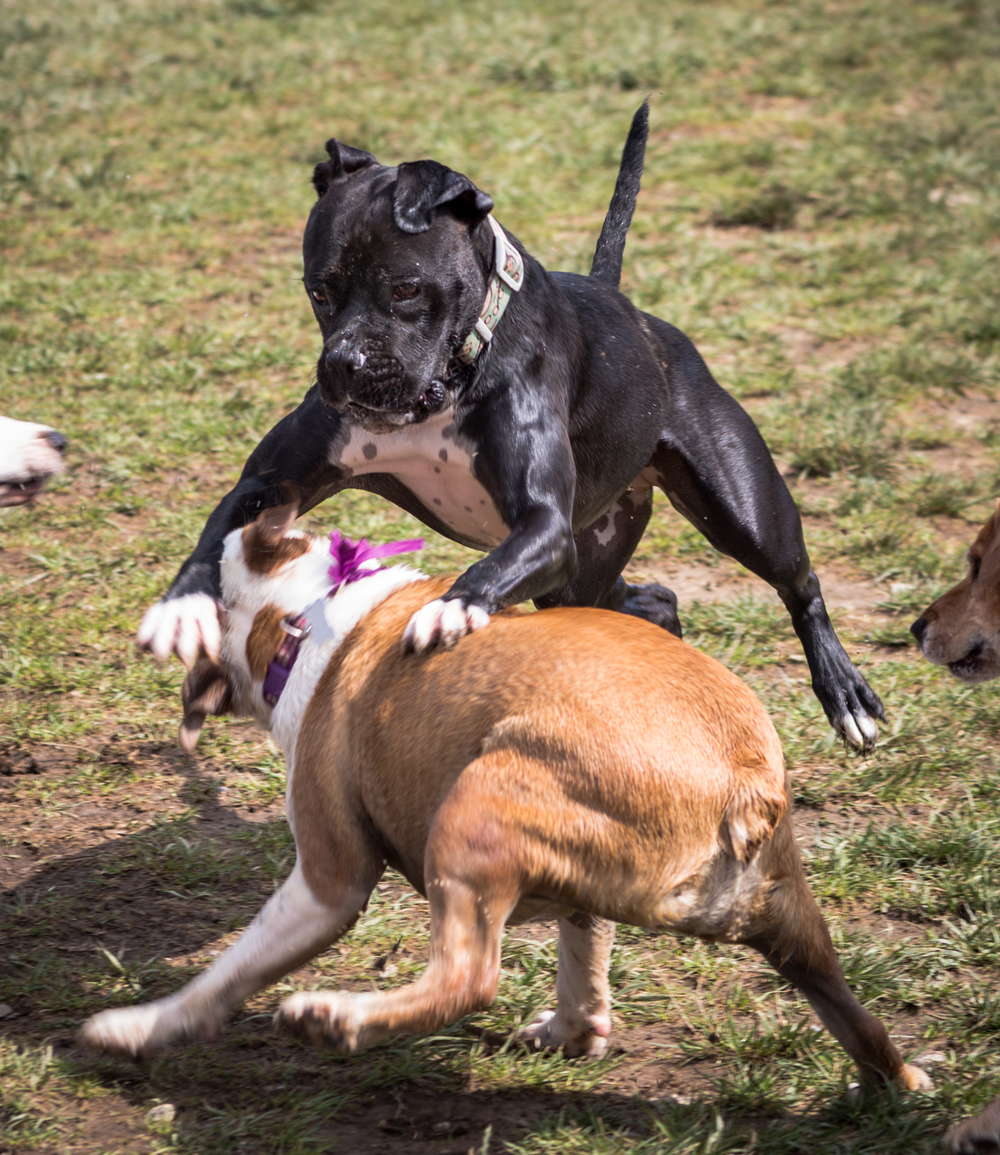 Canine Meadows3-28.jpg