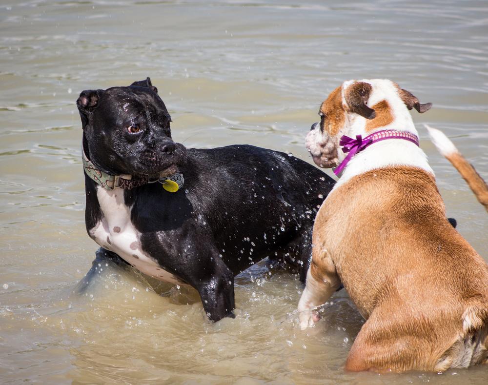Canine Meadows3-29.jpg