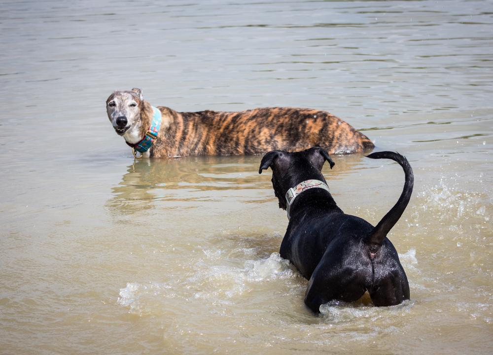 Canine Meadows3-31.jpg