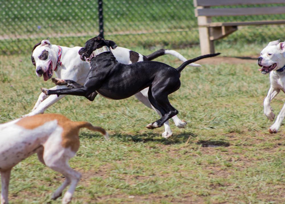 Canine Meadows3-32.jpg