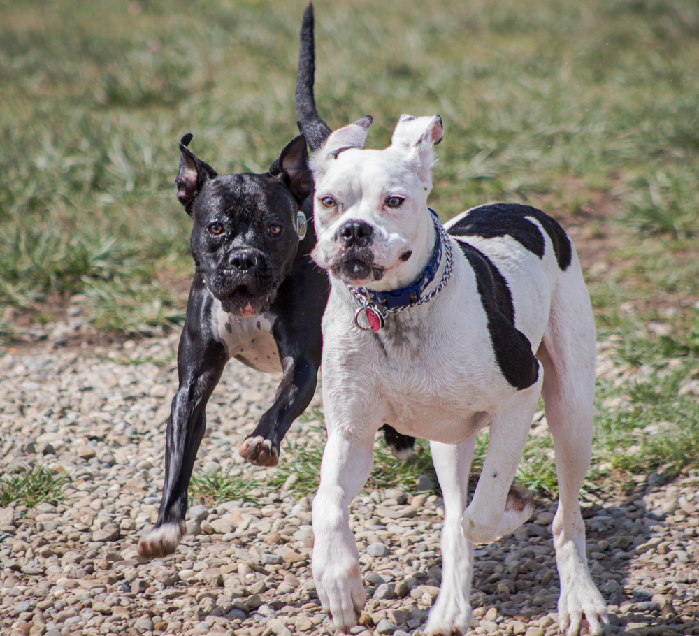 Canine Meadows3-35.jpg