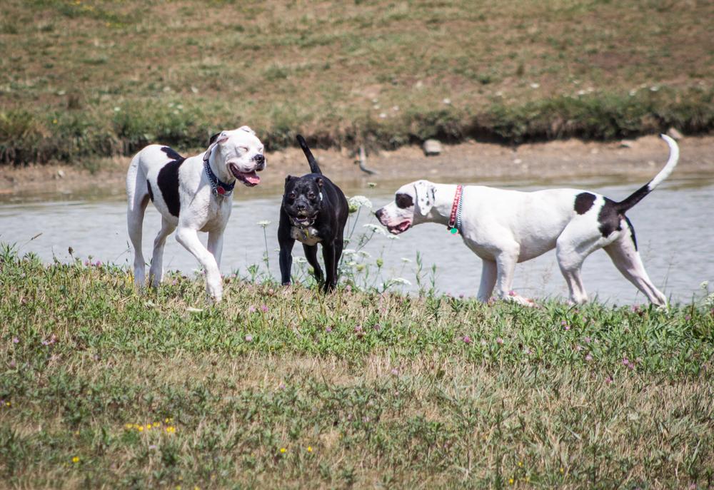 Canine Meadows3-38.jpg