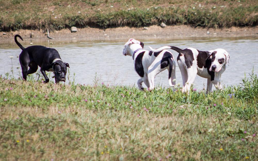 Canine Meadows3-37.jpg