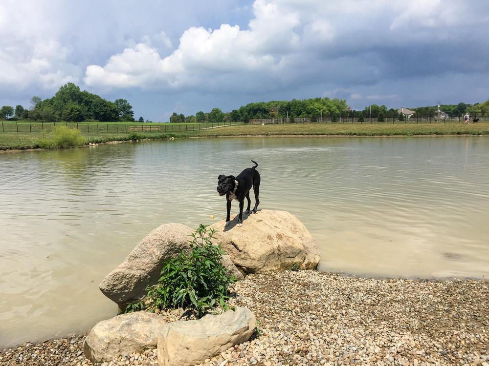 Canine Meadows3-43.jpg
