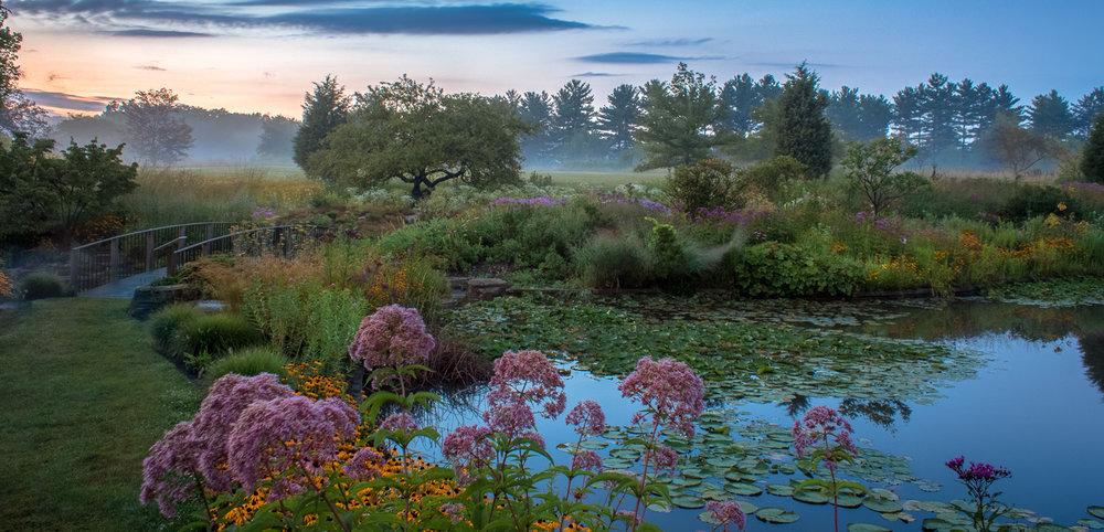 Garden in the Mist II