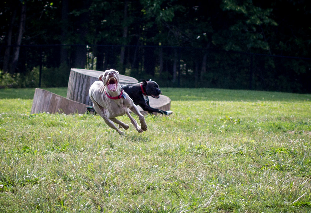 Lacey_dogpark_061817-4.jpg