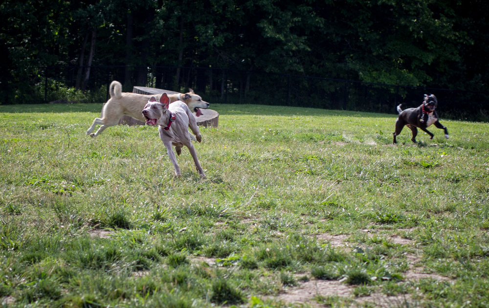 Lacey_dogpark_061817-5.jpg