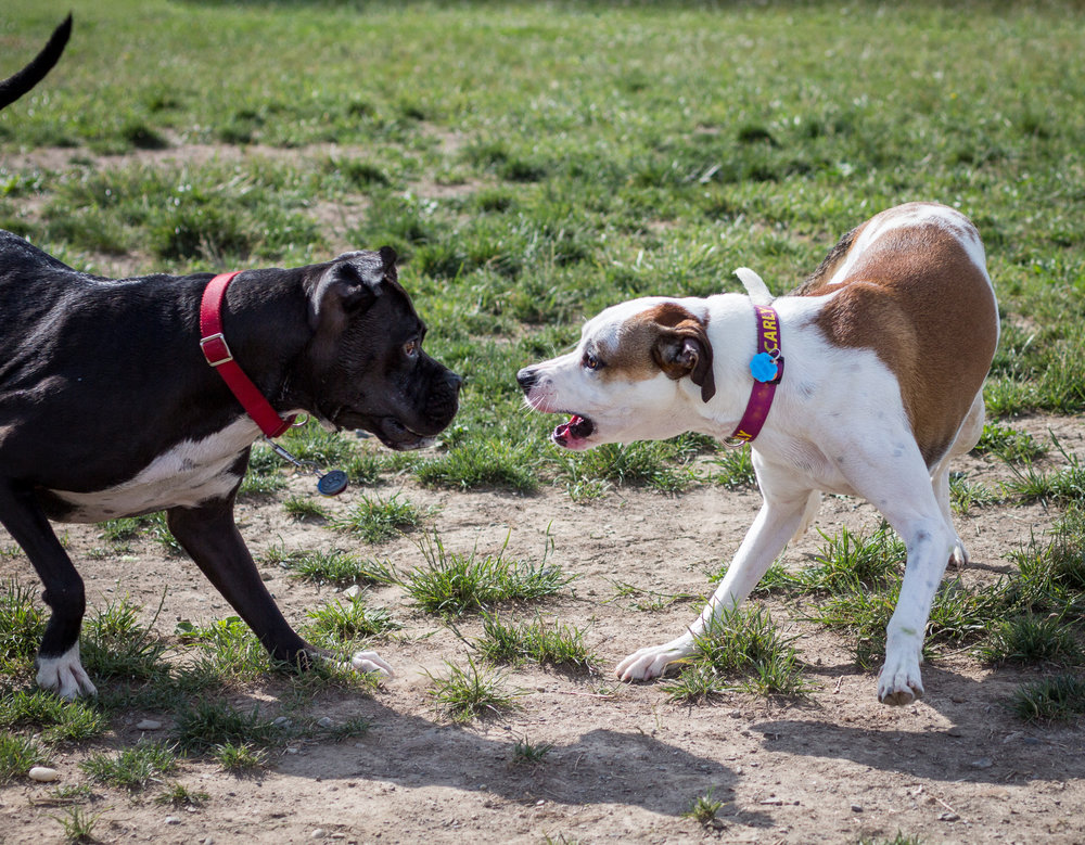 Lacey_dogpark_061817-8.jpg