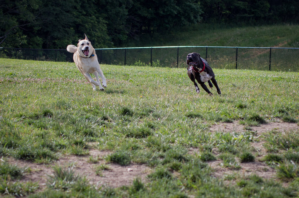 Lacey_dogpark_061817-14.jpg