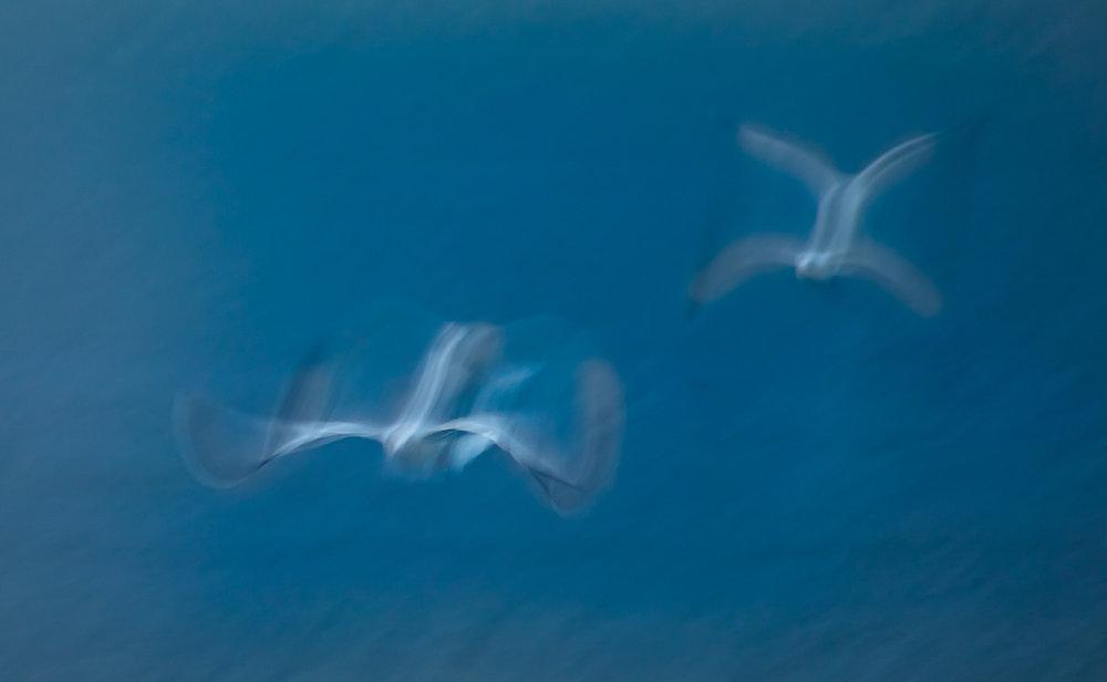 Gulls-2.jpg