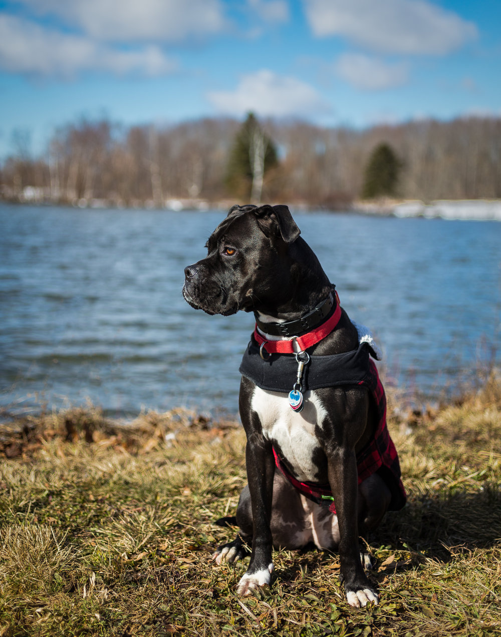 Lacey 2-year--8.jpg