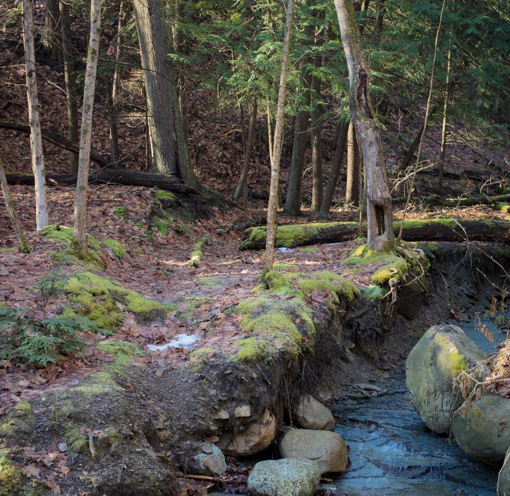 Skok Meadow-6141.jpg