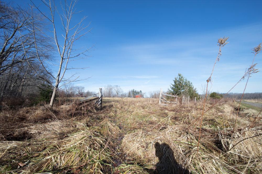 Skok Meadow-6154.jpg