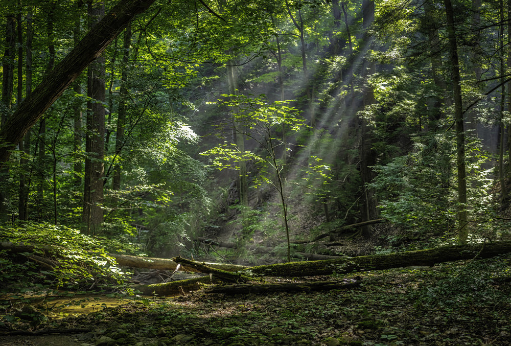 God Rays on Pierson Creek Loop