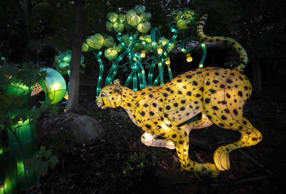Asian Lanterns10.jpg
