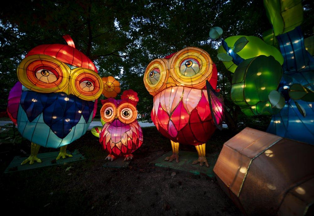 Asian Lanterns18.jpg