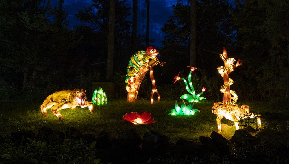 Asian Lanterns30.jpg