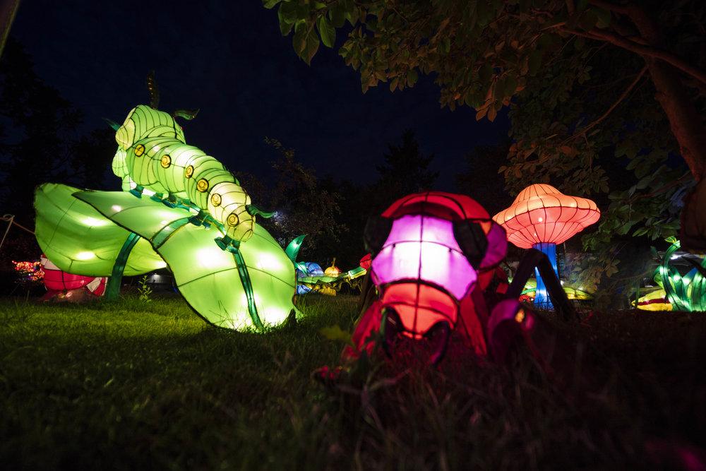 Asian Lanterns31.jpg