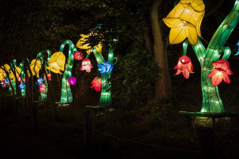 Asian Lanterns44.jpg