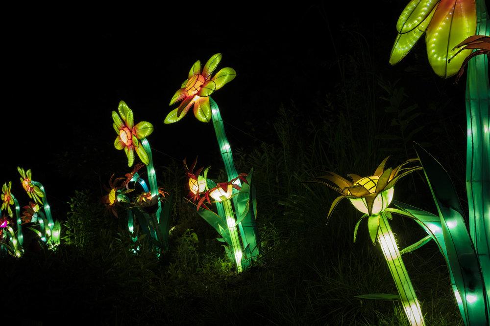 Asian Lanterns51.jpg