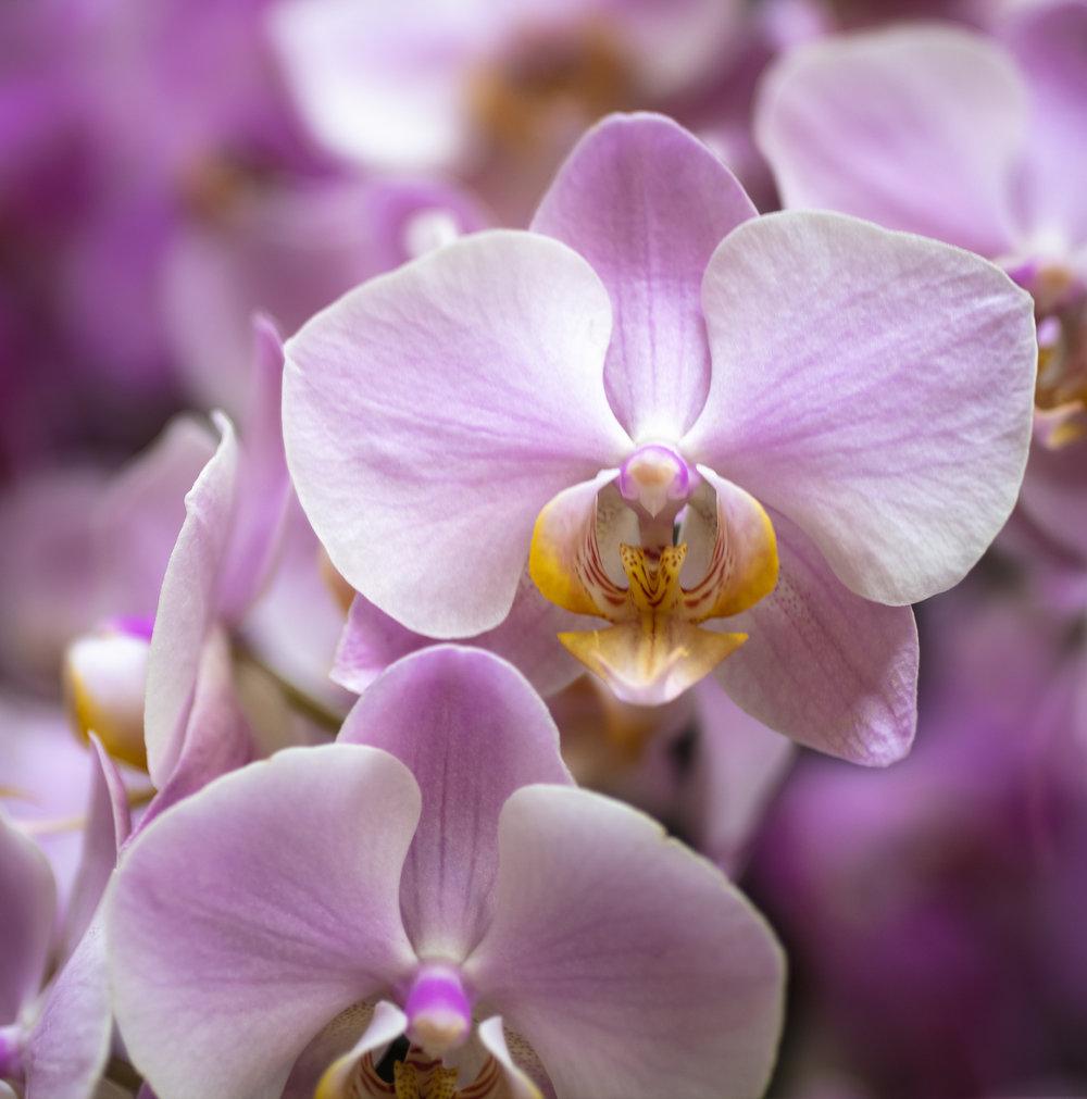 Orchids-3.jpg