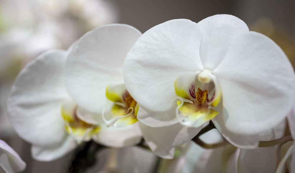 Orchids-6.jpg