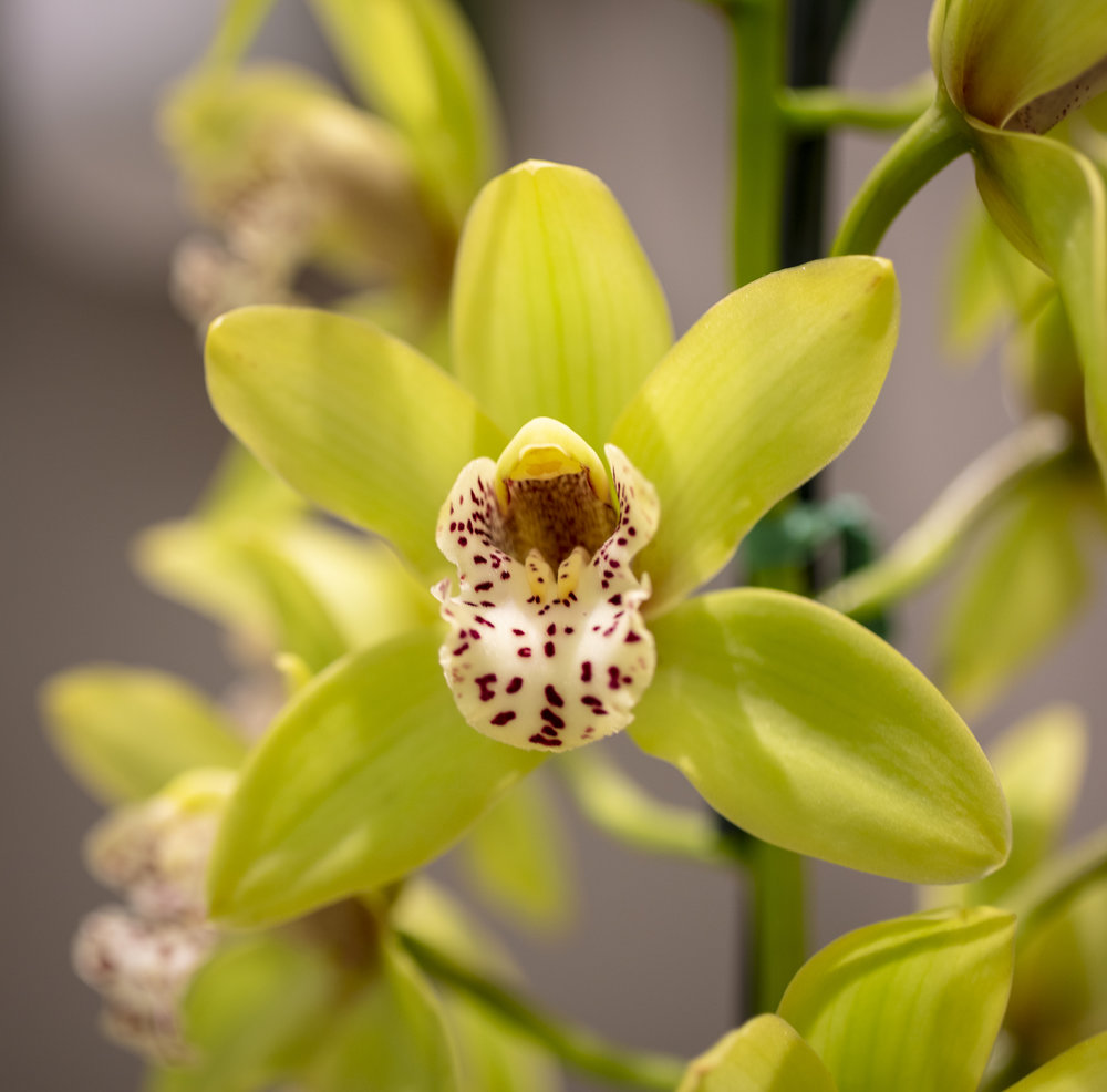 Orchids-8.jpg