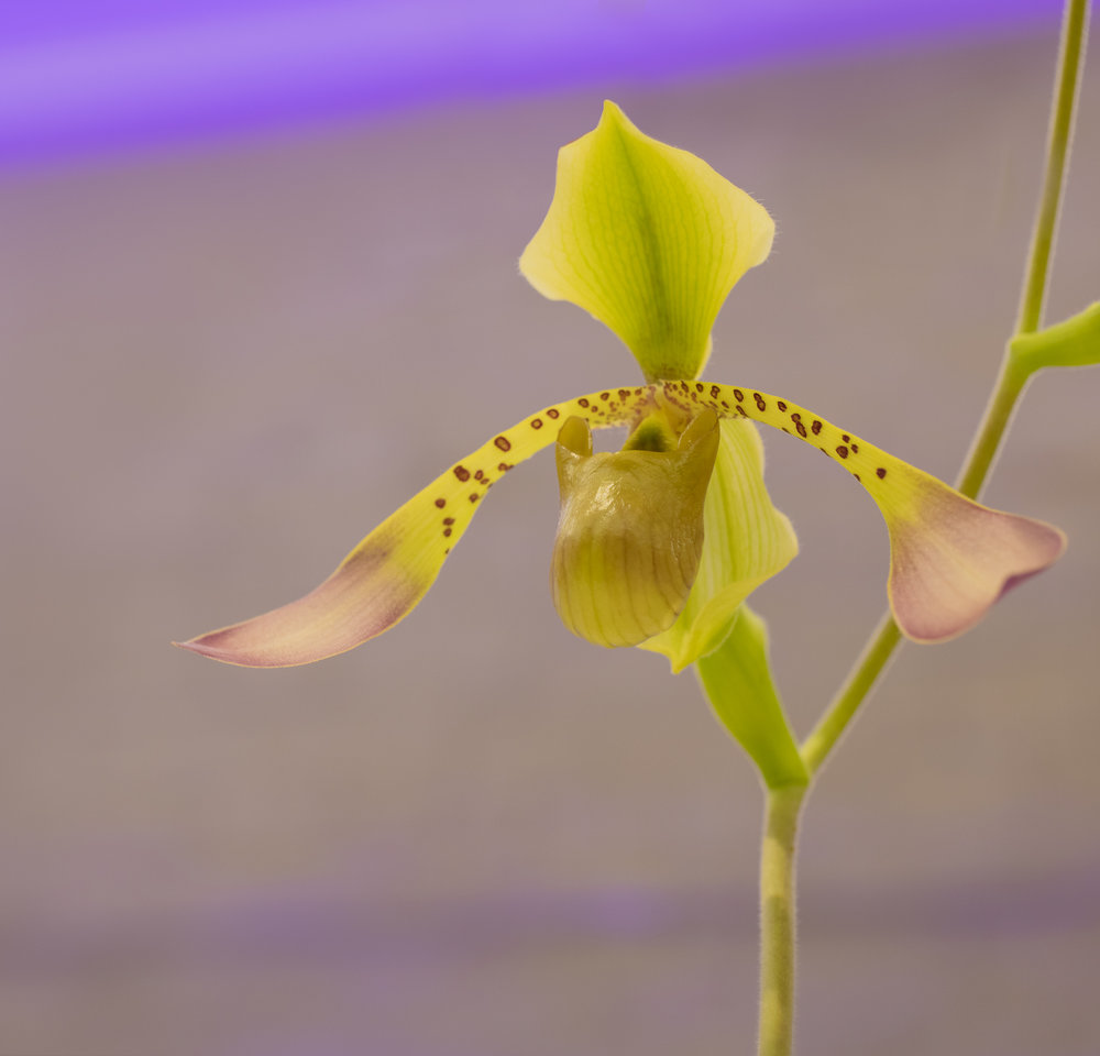 Orchids-11.jpg