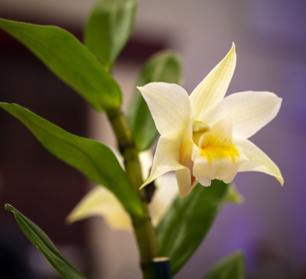 Orchids-13.jpg
