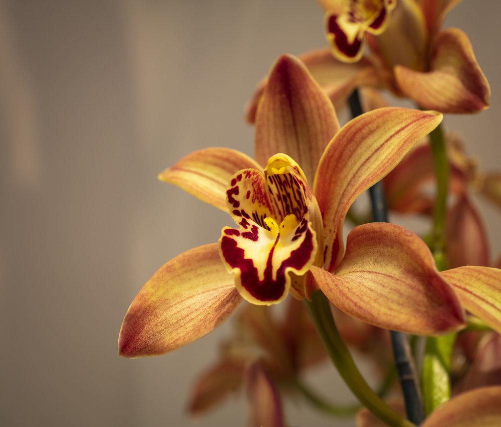 Orchids-15.jpg