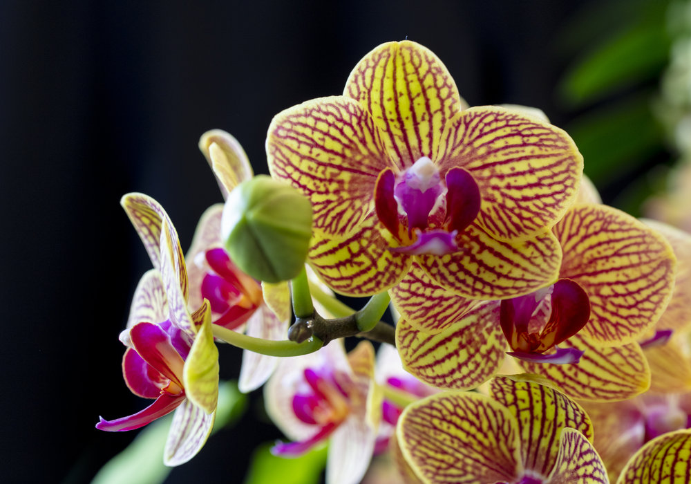 Orchids-17.jpg