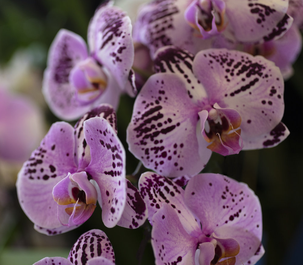 Orchids-21.jpg
