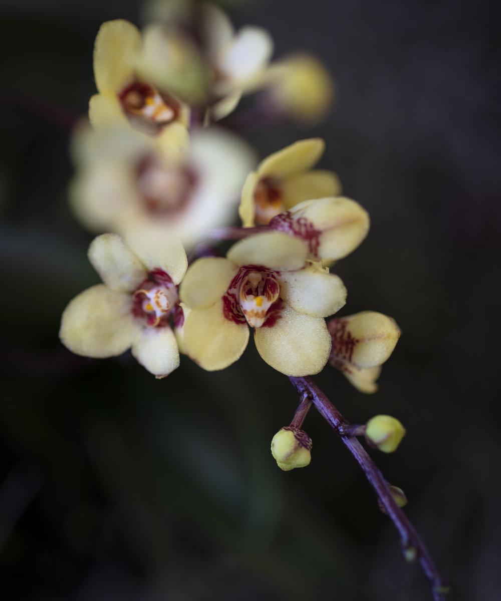 Orchids-23.jpg