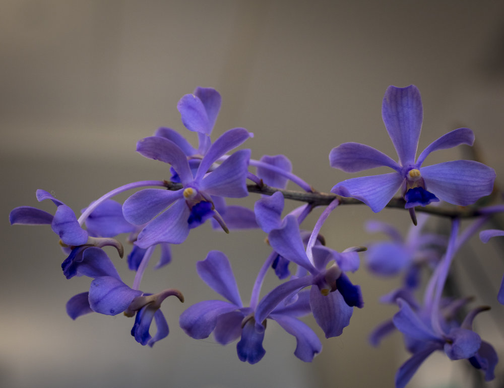 Orchids-24.jpg