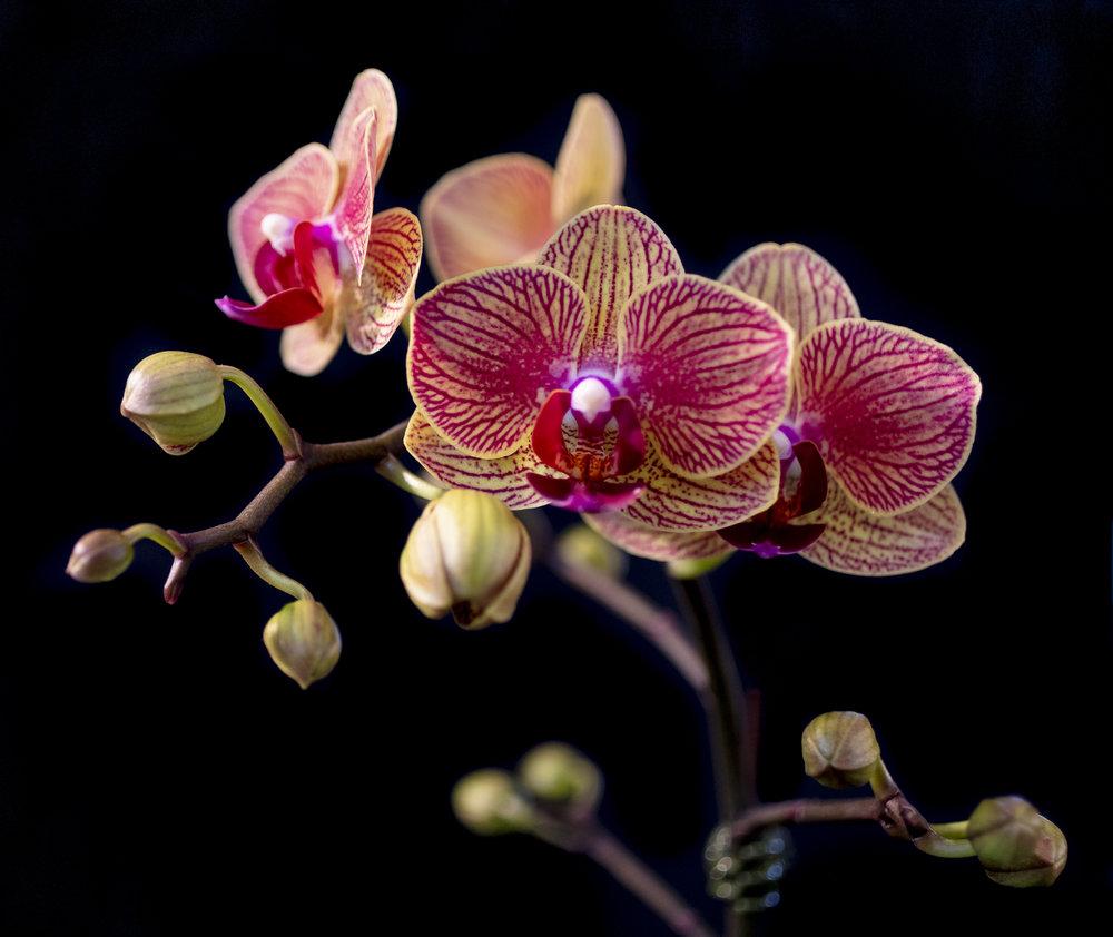 Orchids-30.jpg