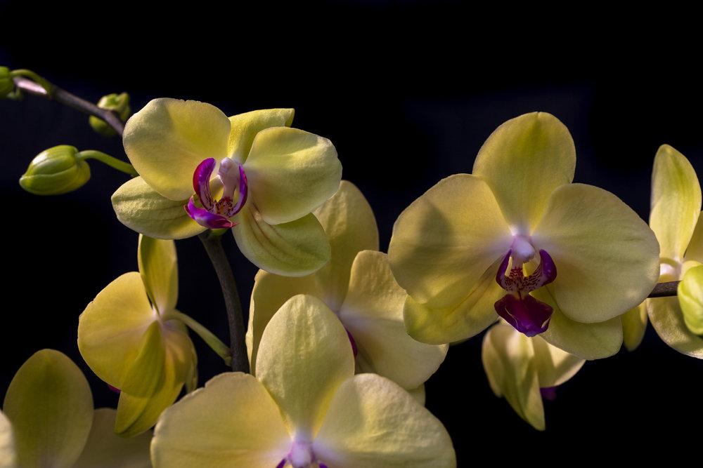 Orchids-31.jpg