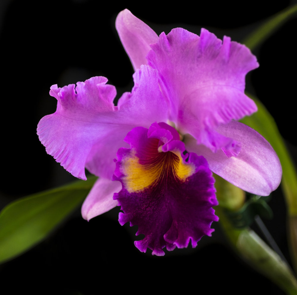 Orchids-32.jpg